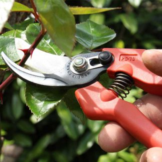 Traditional Secateurs